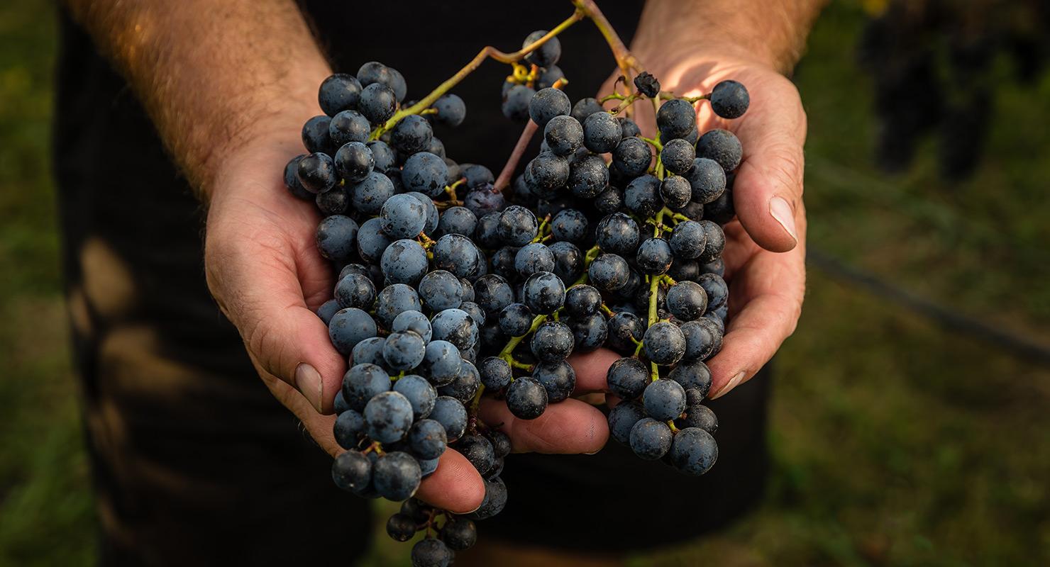Story | Bostock Wines