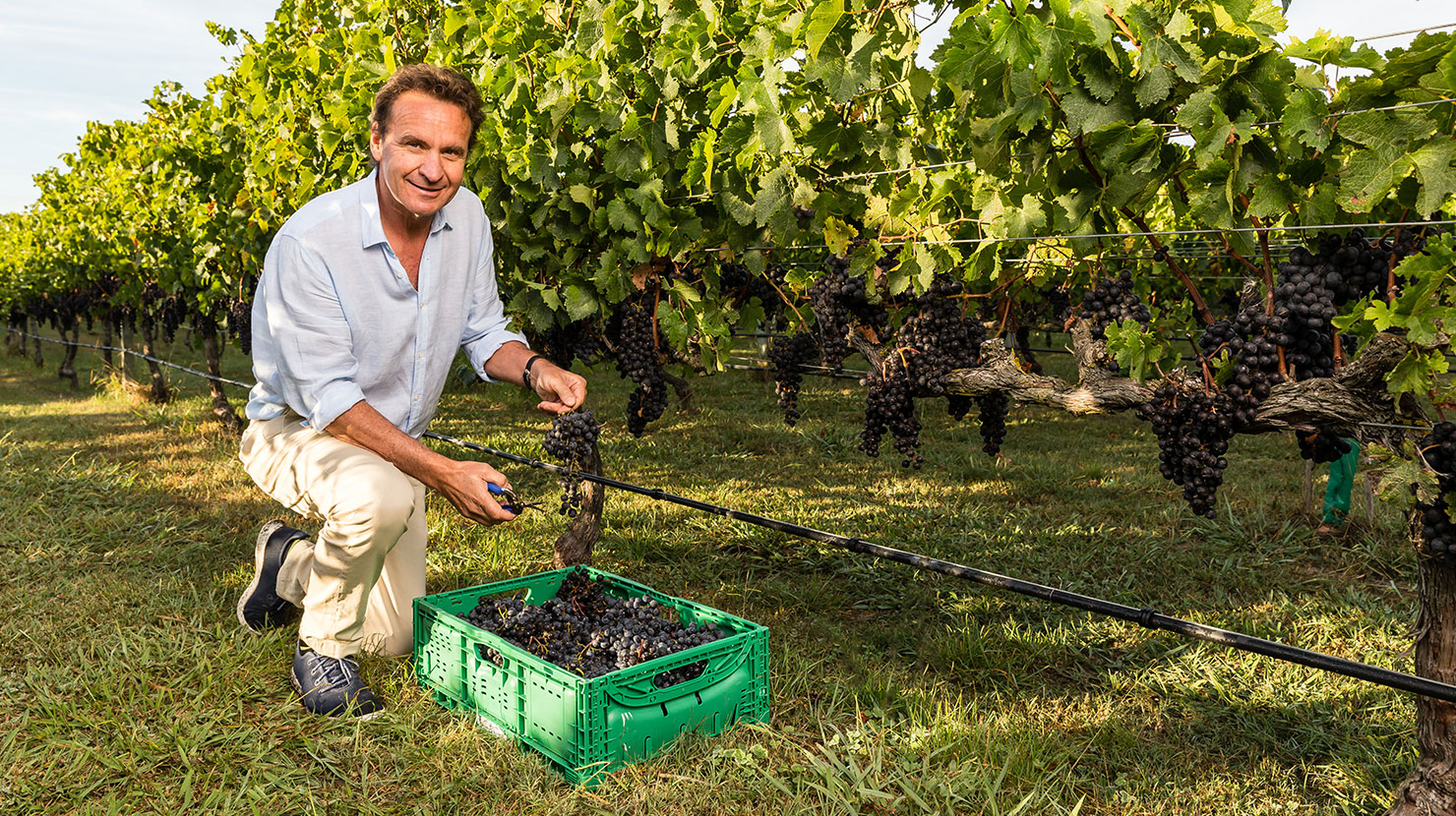 Sustainable Growing | Bostock Wines